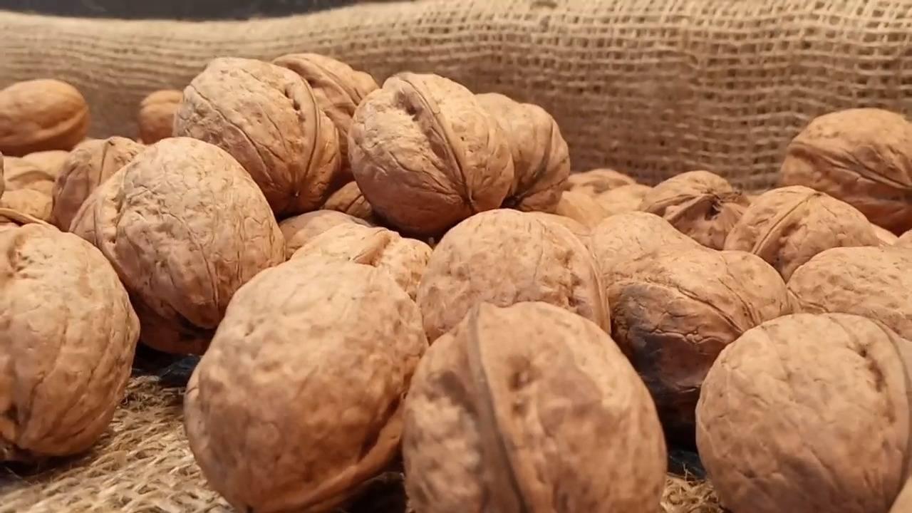 Грецкий орех – посадка и выращивание, зимостойкие сорта, размножение