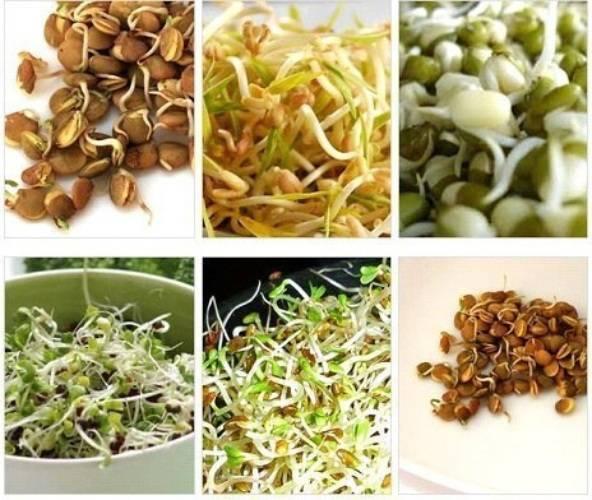 Пророщенные семена злаков - здоровье от природы! способы проращивания и рецепты из проростков   кулинария - всё pro еду!