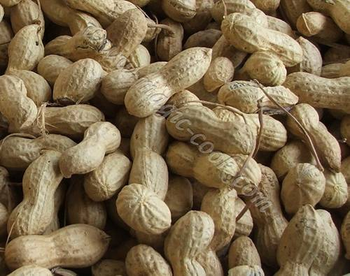 Сорта арахиса
