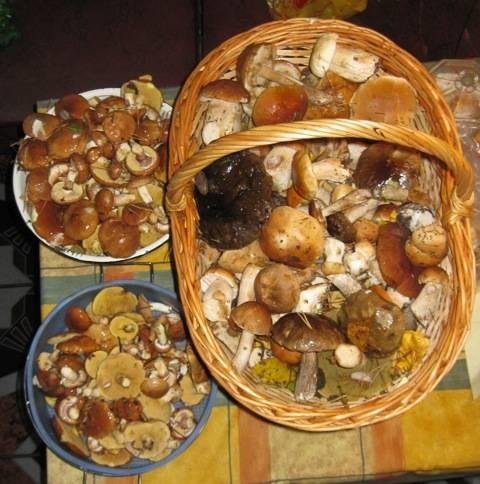 Как закрыть маслята: лучшие рецепты консервирования грибов