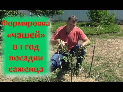 Выращивание грецкого ореха | сад и огород - интернет журнал о даче