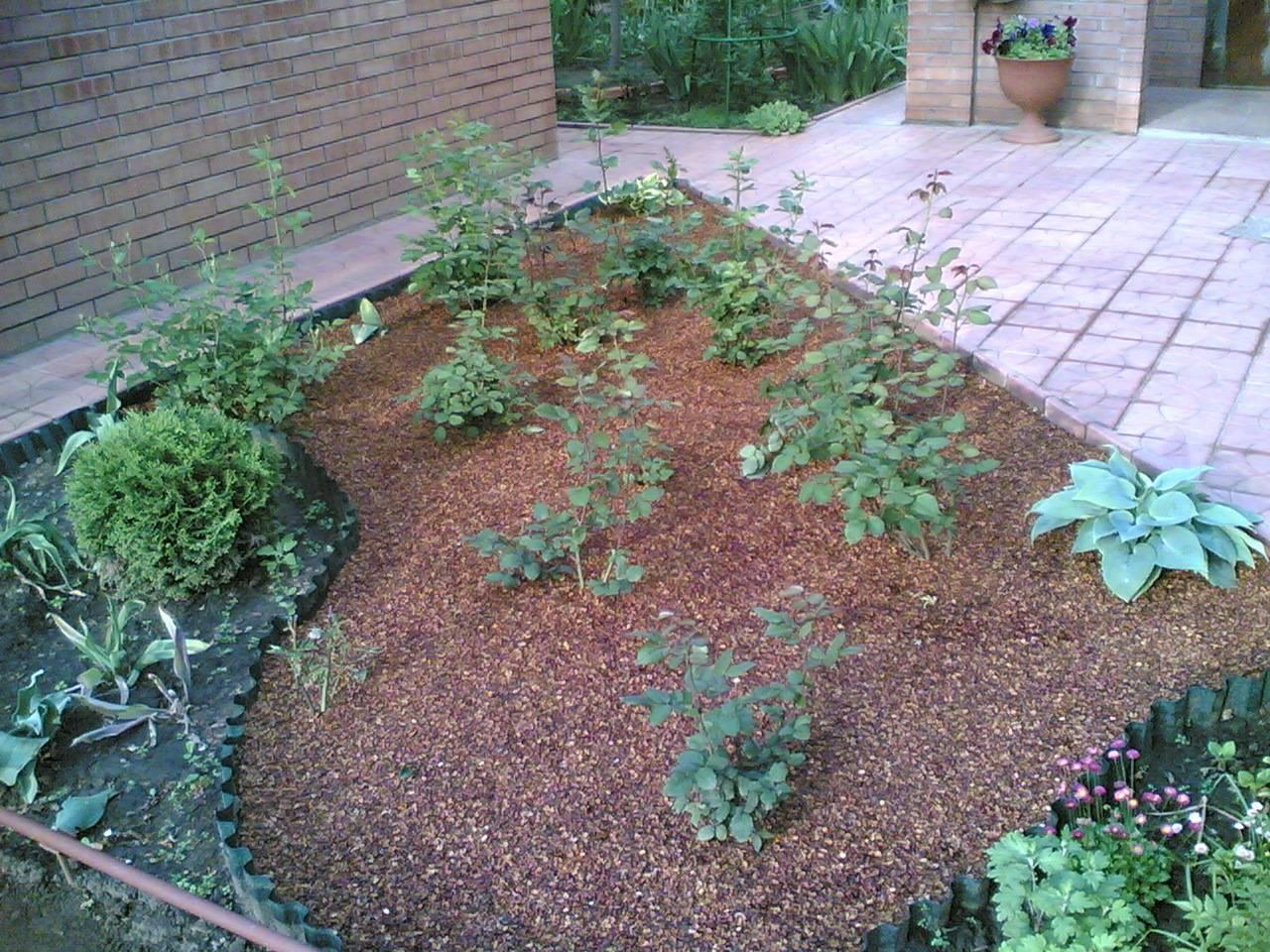 Скорлупа грецкого ореха применение в огороде как удобрение