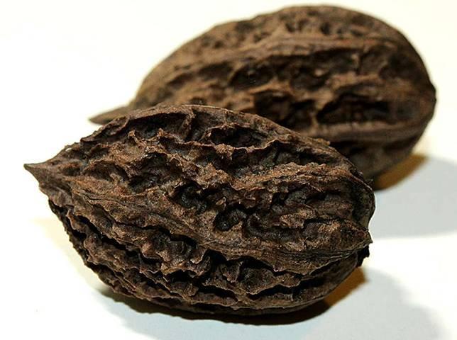 Маньчжурский орех: чем полезен, что лечит