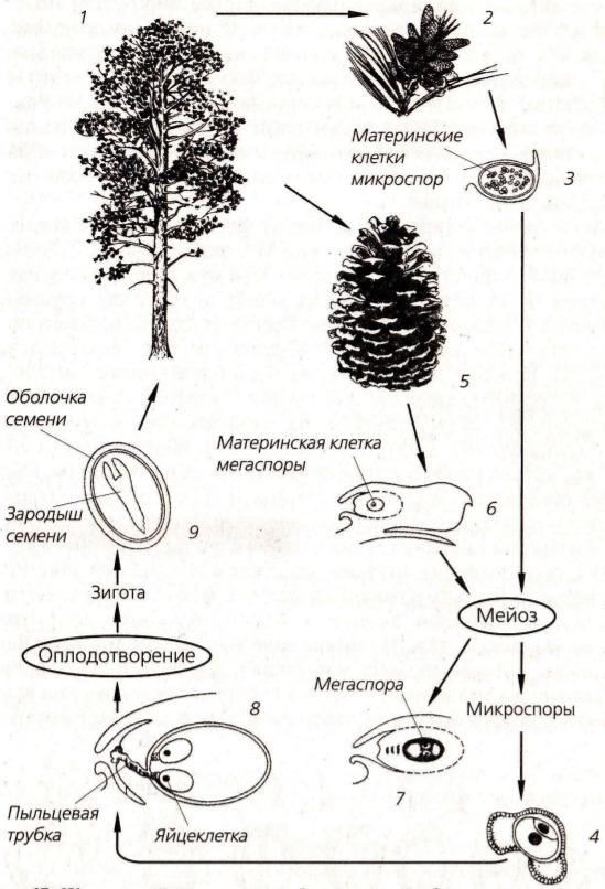 Апорокактус - уход в домашних условиях, фото, размножение, болезни, виды
