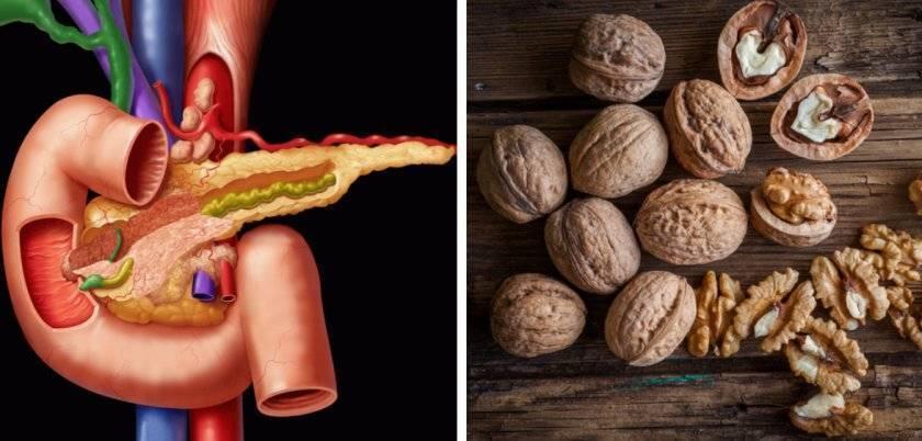 Польза и вред грецких орехов для здоровья человека