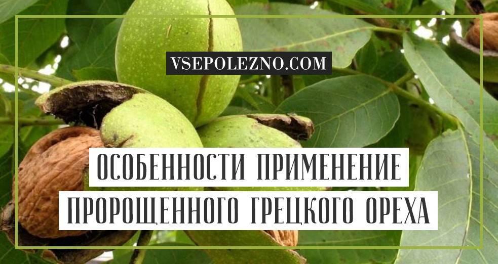 Болезни грецкого ореха: первые признаки, способы лечения, обработка