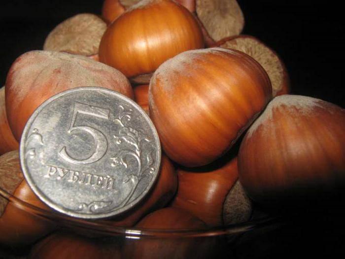 Фундук трапезунд – посадка и особенности ухода