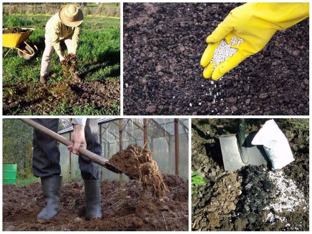 Подготовка почвы под орех Заделка сидератов