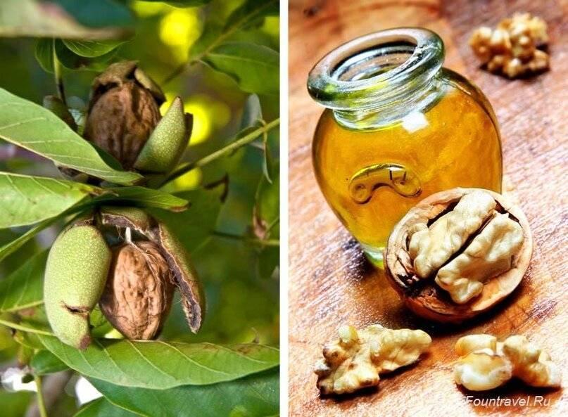 Масло грецкого ореха: польза и вред, как принимать правильно