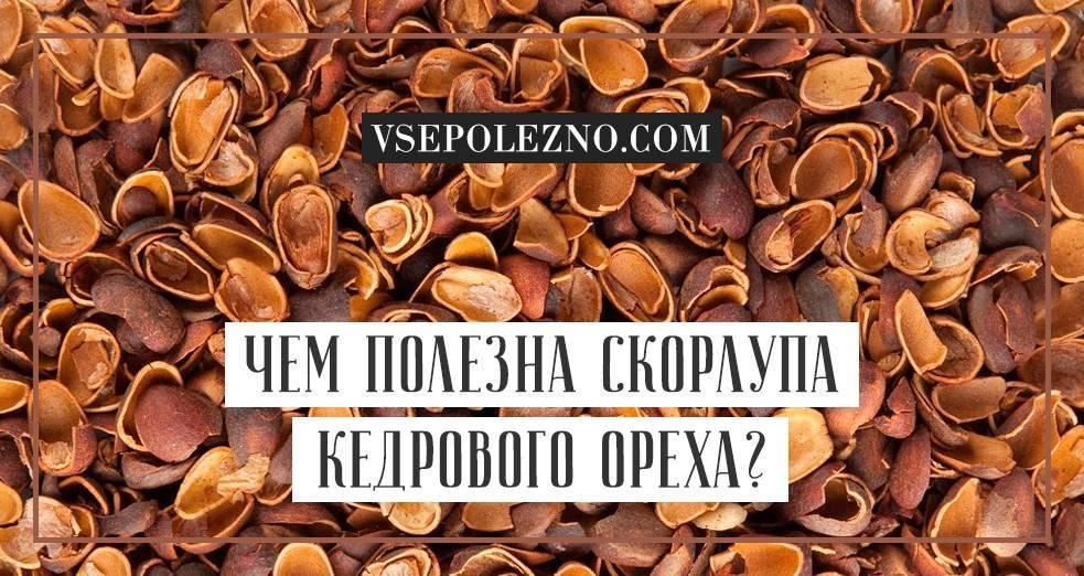 Кедровые орехи: польза и вред для организма, лечебные свойства, отзывы