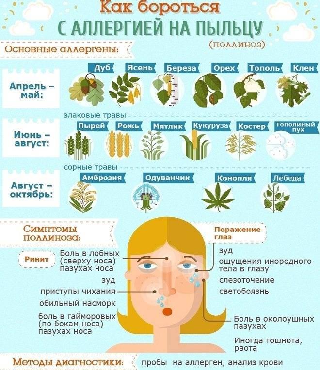 Аллергия на грецкий орех и перекрестные реакции • аллергия и аллергические реакции