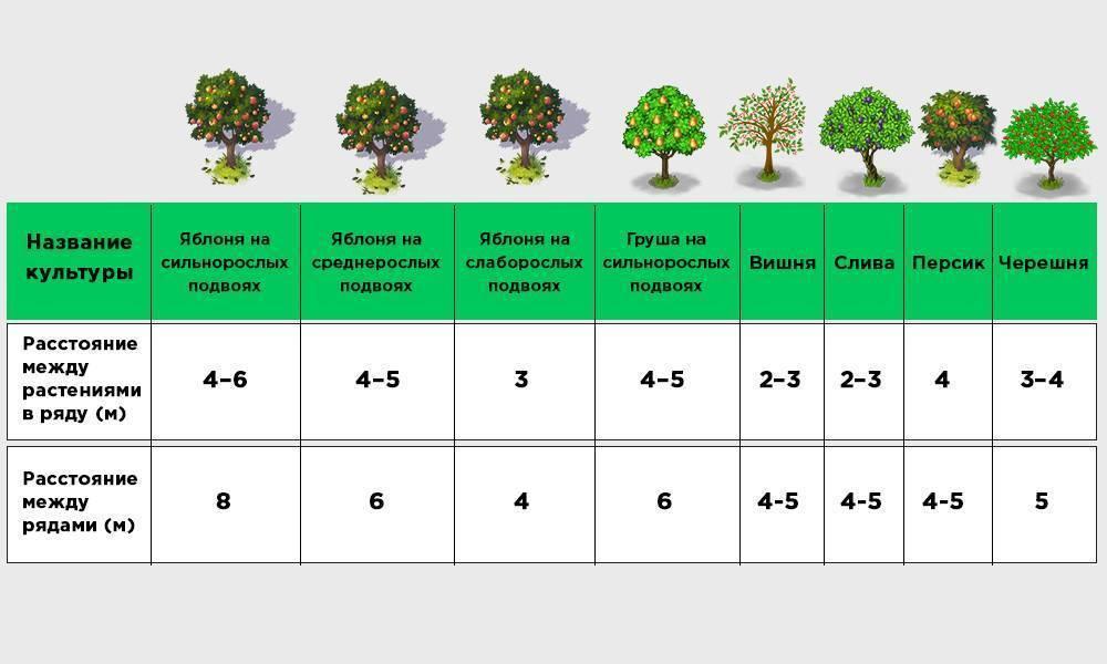 Почва для грецкого ореха: какую любит, как определить ее параметры и подготовить для посадки?