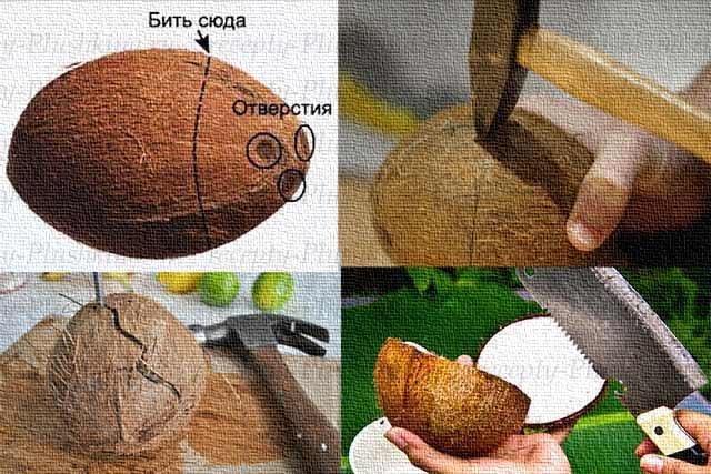 Как открыть кокос за 15 секунд: ларчик открывается просто, надо знать как