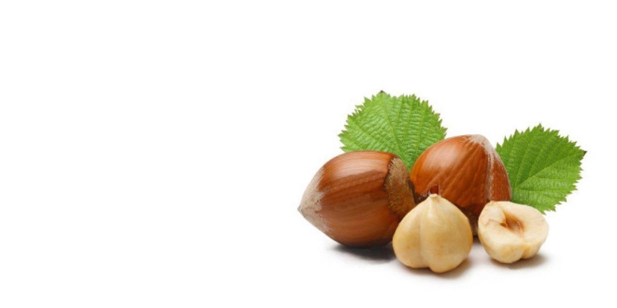 Фундук: польза и вред для организма, сколько можно съесть