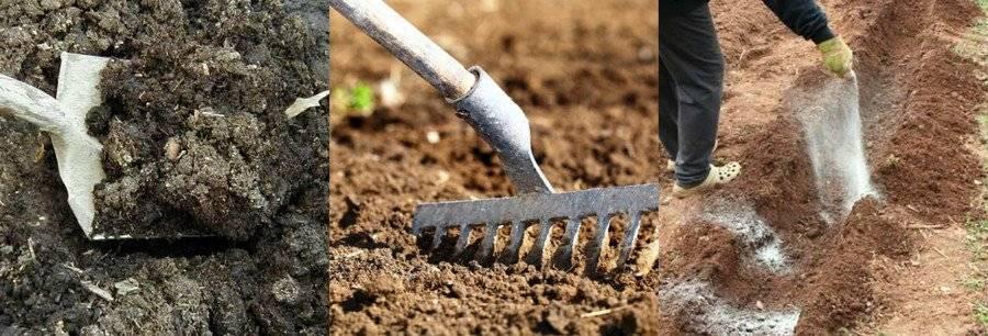 Какой сидерат лучше для глинистой почвы. особенности использования сидератов для разных видов почв