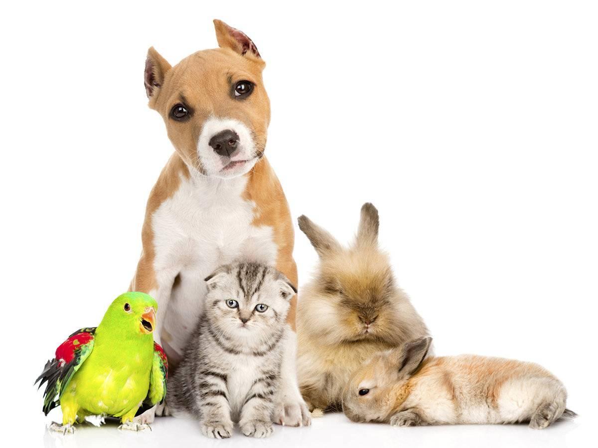 Можно ли кошкам собачий корм: да, нет, и почему