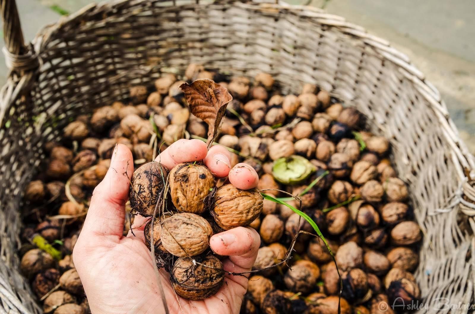 Как хранить очищенный грецкий орех в домашних условиях: советы, отзывы