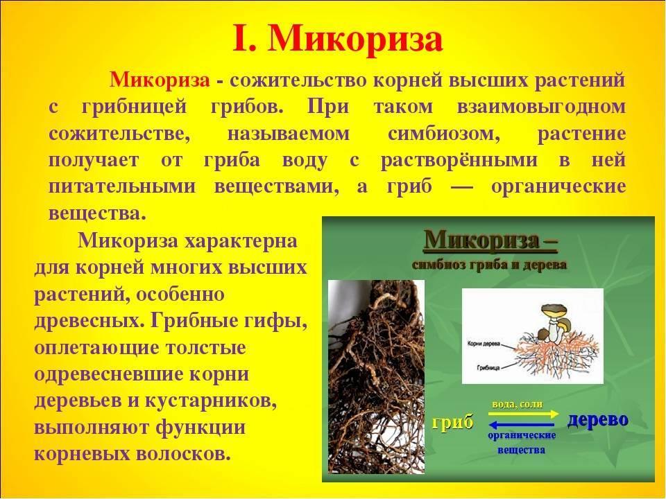 Выращивание культур с микоризой