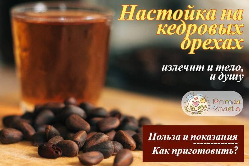 Настойка на кедровых орешках: 6 рецептов в домашних условиях