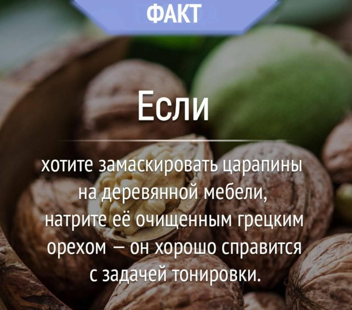 Описание грецкого ореха сорта идеал