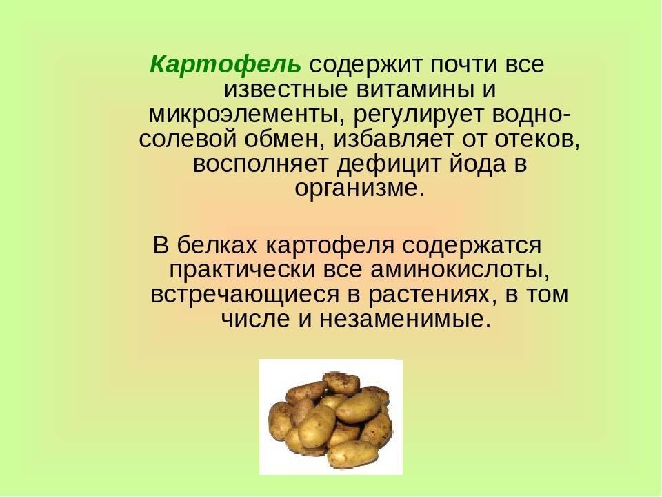 Кедровые орехи: польза и вред, сколько нужно есть в день