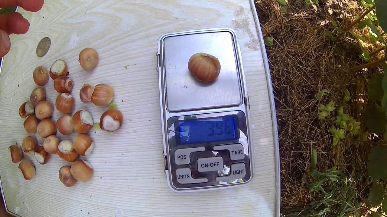 Лесной орех • ru.knowledgr.com
