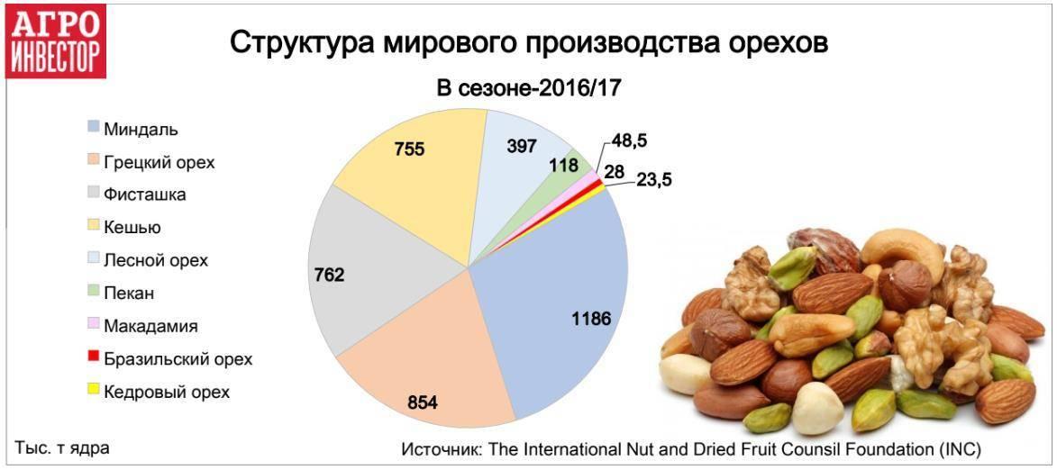 Бизнес на орехах – бизнес-план выращивания орехов