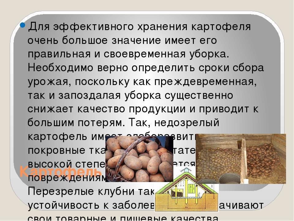 Когда и как собирают грецкие орехи — где и в каком месяце урожай