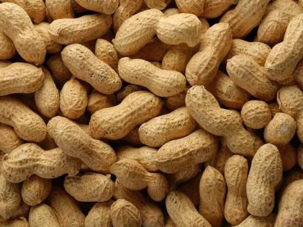 Польза арахиса для организма человека, фото, калорийность