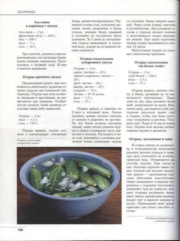 Хрустящие классические малосольные огурцы в кастрюле с холодной водой, рассолом — 7 рецептов приготовления