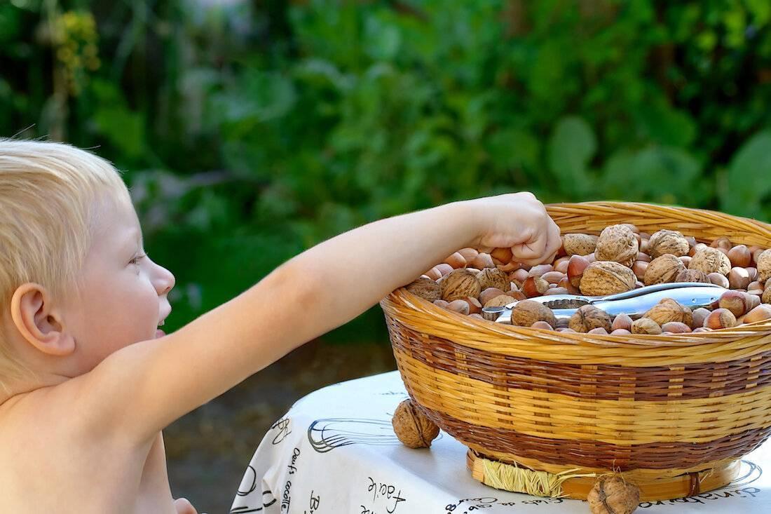 Орех макадамия детям: можно ли употреблять малышам и со скольки лет, до какого возраста есть нельзя, в чем польза и вред для организма, полезен ли для улучшения сна?