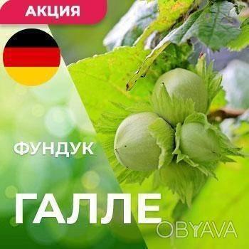 Современный сортимент ореховых культур | аппяпм
