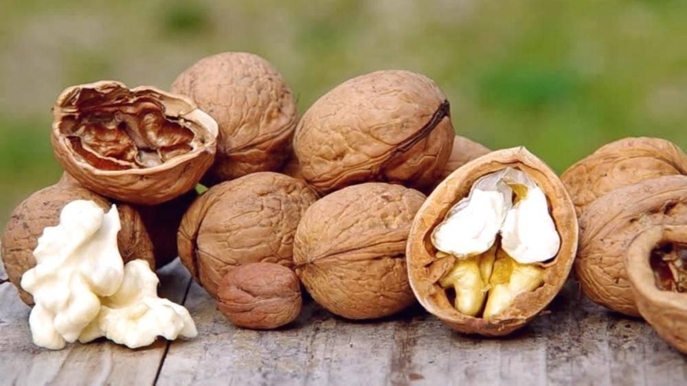 Плодовитые сорта грецкого ореха дают большую урожайность и прибыль