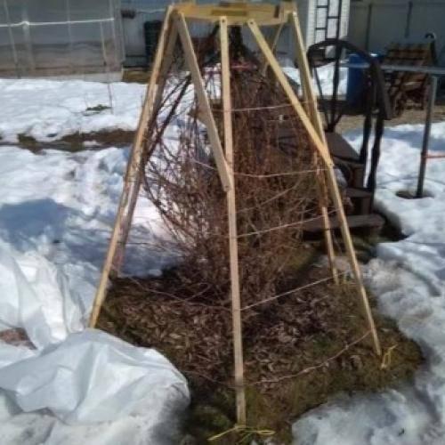 Как утеплять деревья на зиму — подготовка фруктовых деревьев к холодам