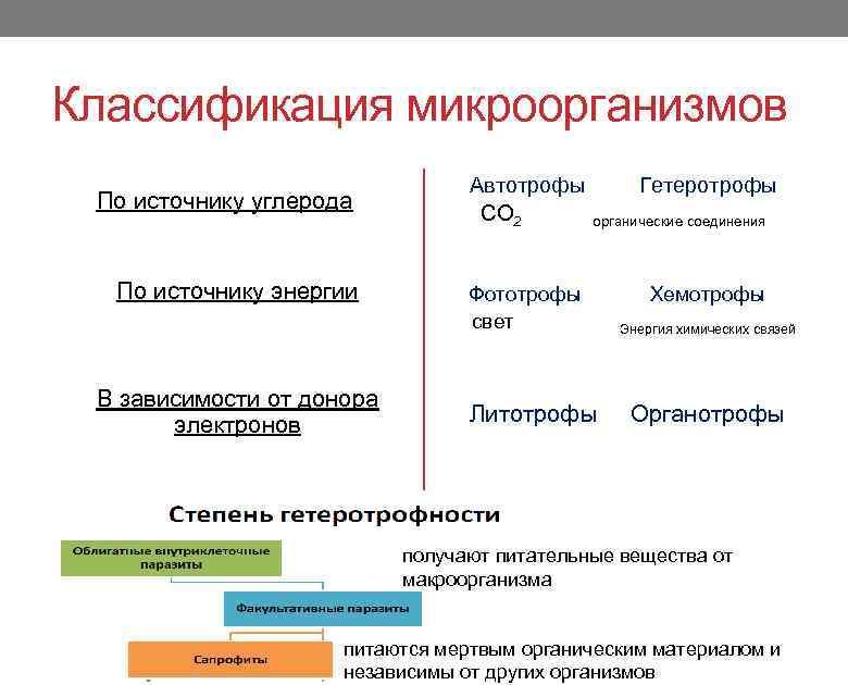 Систематика микроорганизмов. классификация бактерий, грибов и дрожжей