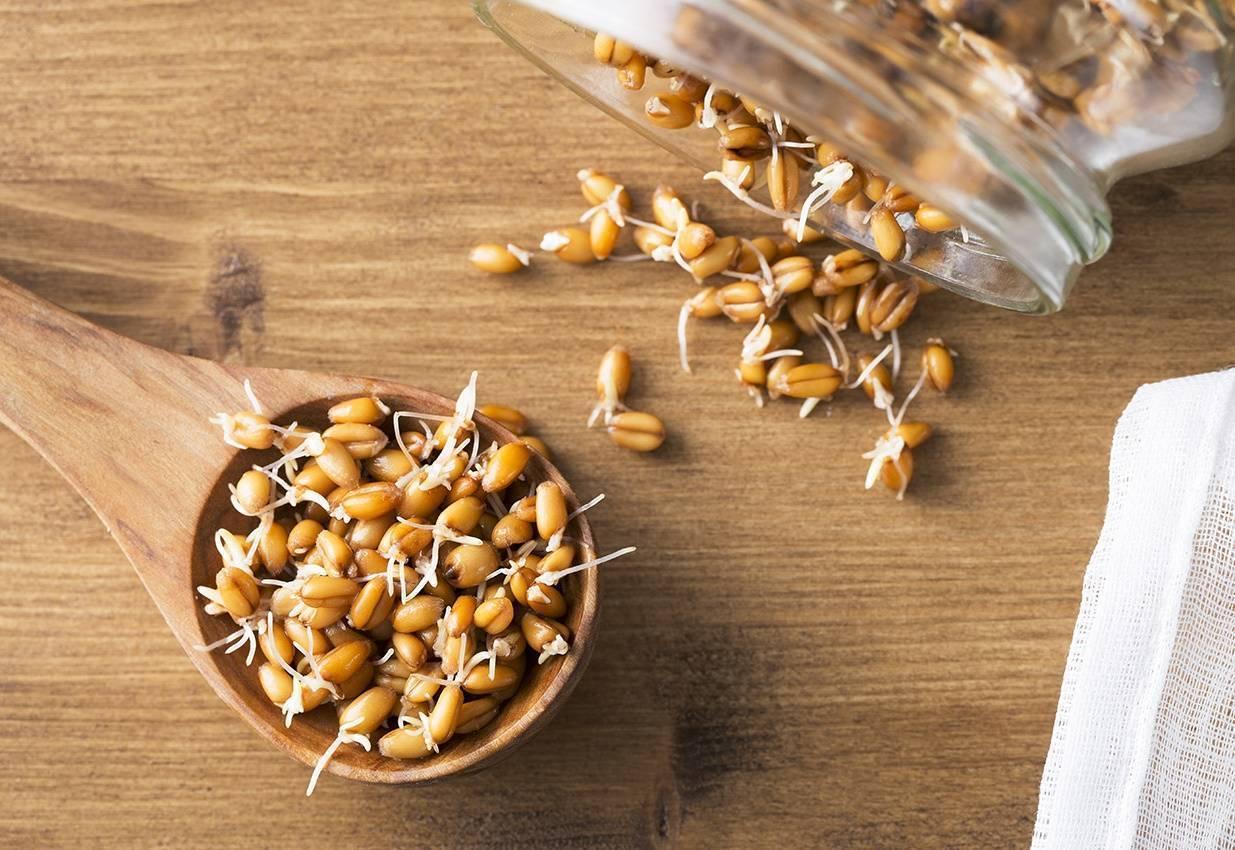 Пророщенная пшеница: польза и вред, как употреблять, рецепты, отзывы