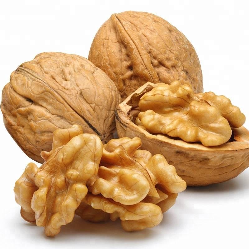 Грецкий орех – польза, вред, применение в народной медицине