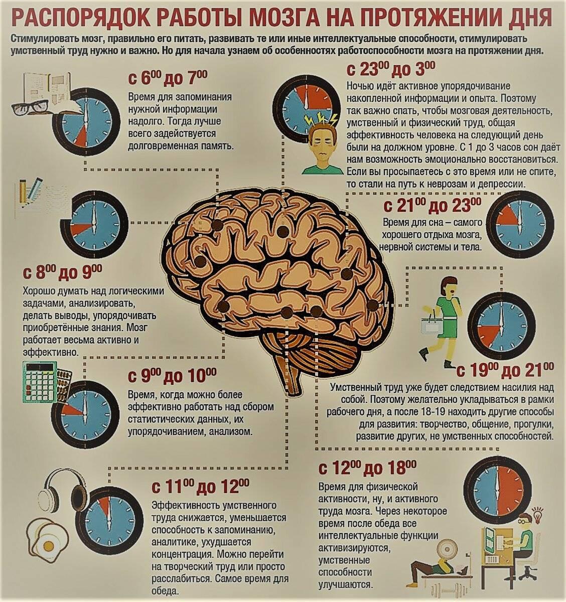 Полезные продукты для мозга: какие улучшают работу, какие вредны, список