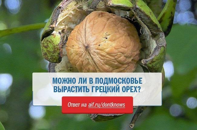 Как вырастить грецкий орех: в подмосковье, в сибири, на урале, в средней полосе