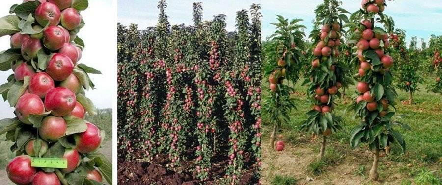 Миндаль: как растет в природе дерево, какие названия, как выглядит семечка, откуда берется растение, относится ли к фруктам и ягодам, и описание ореха в скорлупе