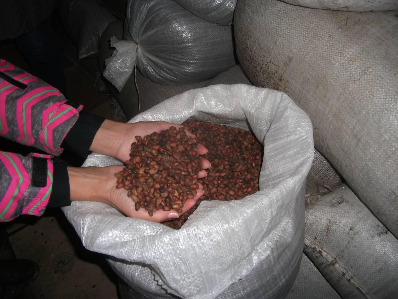 Срок годности кедрового ореха очищенного в вакууме + советы, условия, что делать