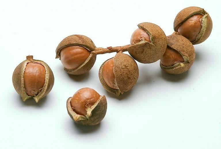 Экзотический орех — кокос. как его хранить и какое время продукт не испортится?