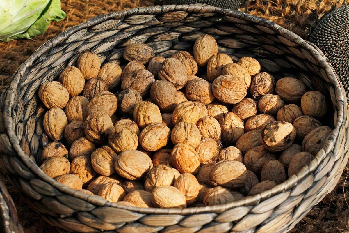 Грецкий орех «трофей»: описание сорта, характеристика, отличия, уход, сбор урожая, краткая история появления, а также когда сажают в разных регионах?