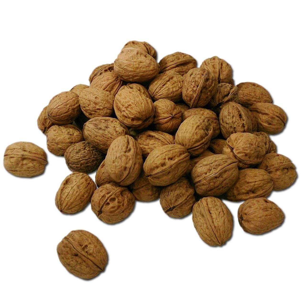 Чилийский орех польза и вред