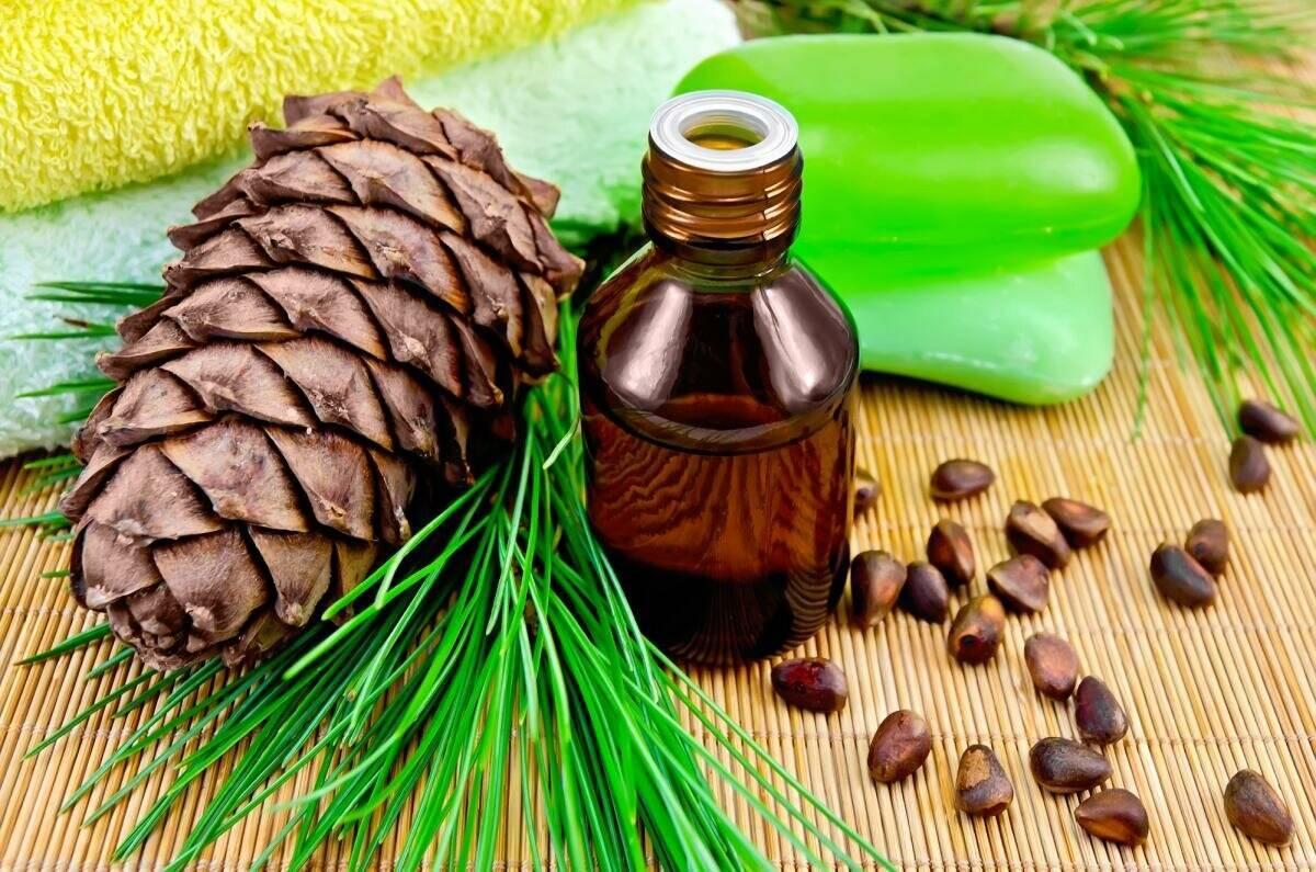 Кедровое масло: лечебные свойства и противопоказания к применению