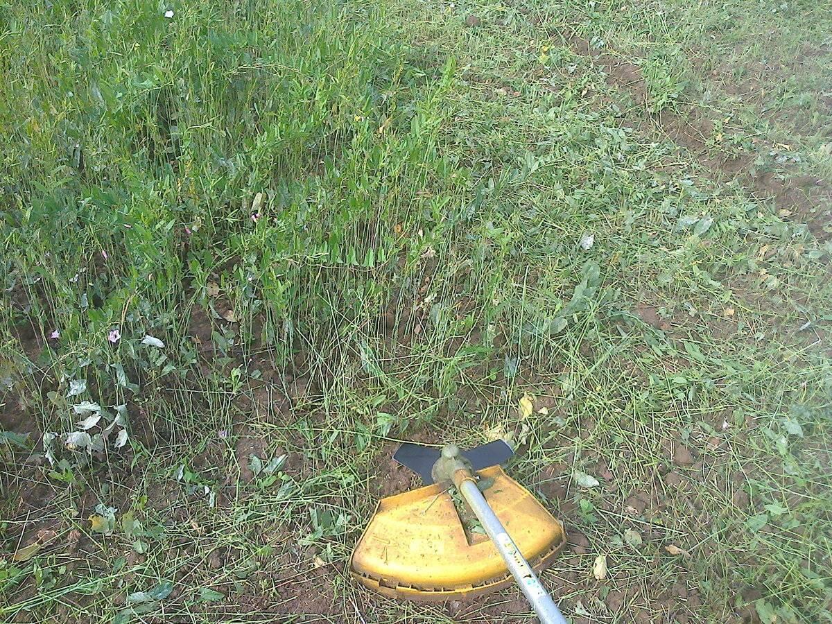 Сидераты для огорода: какие лучше, как и когда сеять