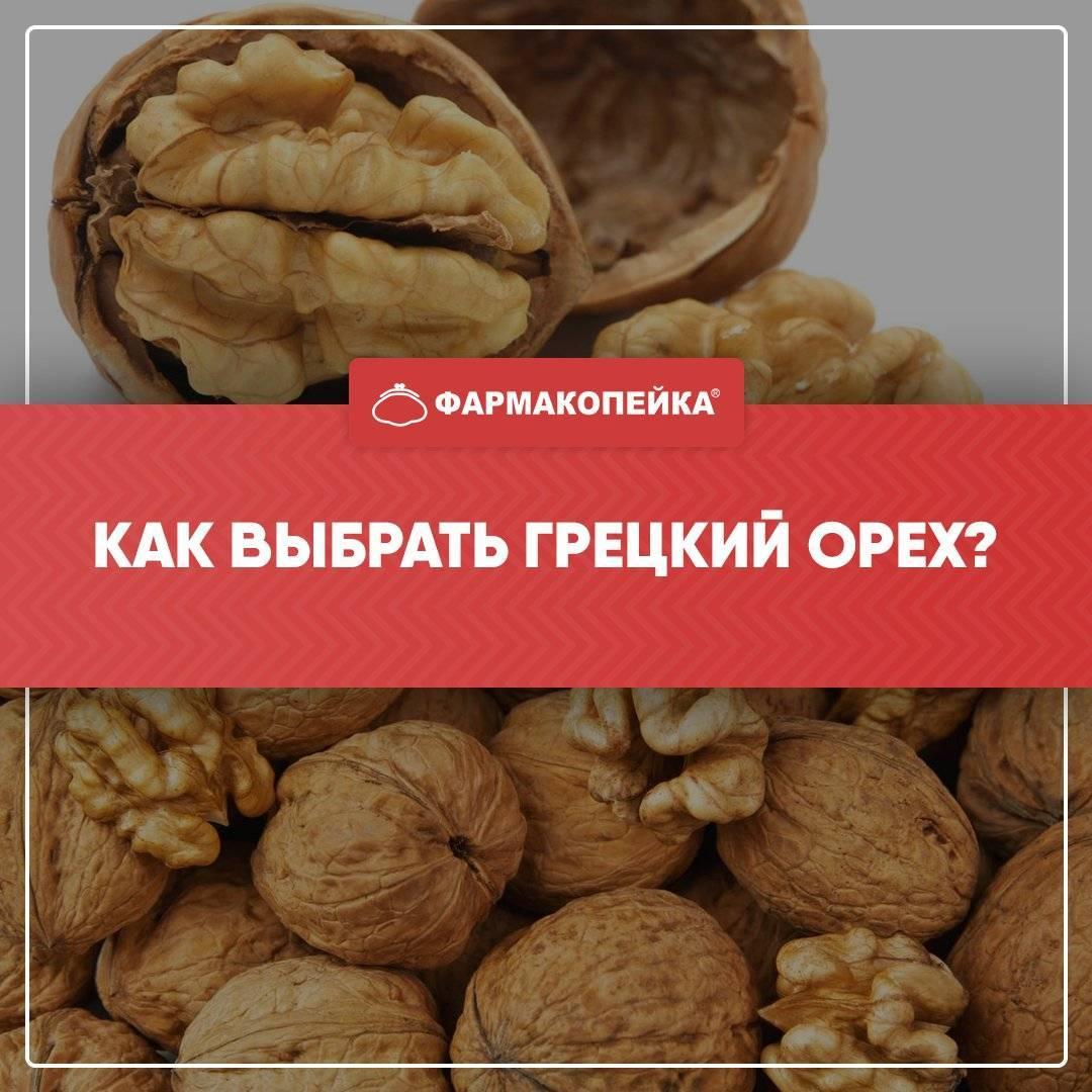 Определение терминов и дефектов ядер грецких орехов