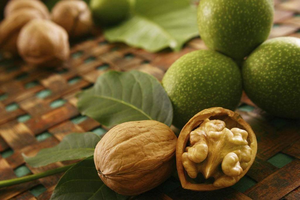 Чем полезен грецкий орех для мужчин и женщин. свойства и состав, польза и вред грецкого ореха