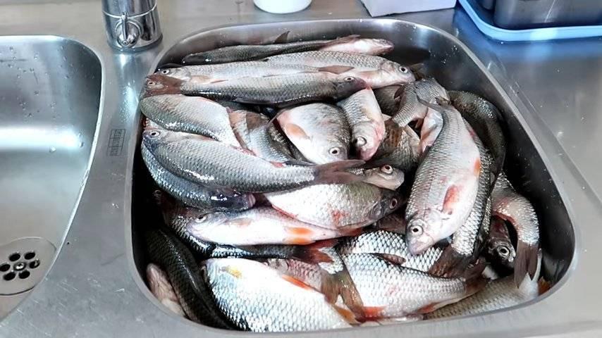 Как солить красную рыбу в домашних условиях вкусно и просто — 8 рецептов пошагово
