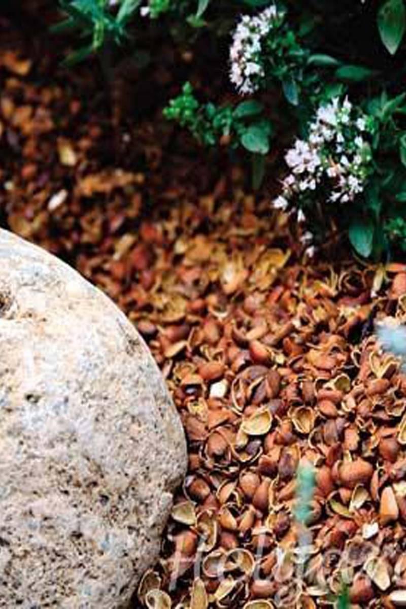 Cкорлупа грецкого ореха: в огороде, как удобрение, как мульча